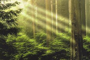 写真:ヴァルトの家づくりの原点である「森」